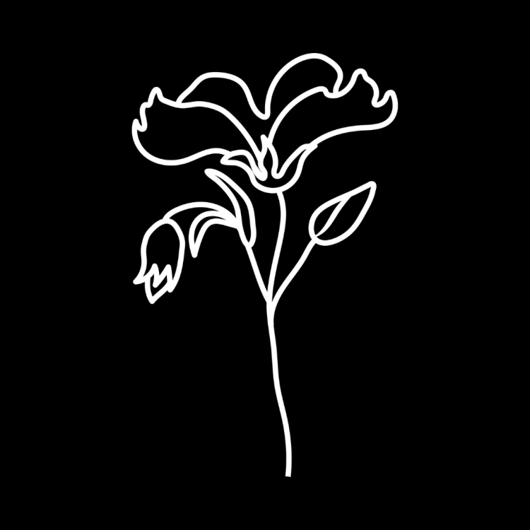Black and white line art drawing of a wild flower.